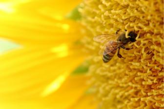 Méhpempő a méregtelenítésben